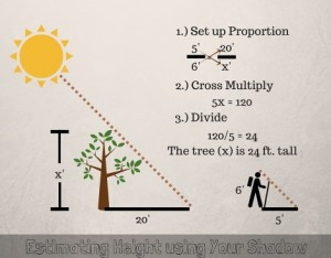 3-easy-ways-to-estimate-height-in-the-woods-thesurvivalsherpa-com