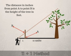 copy-of-3-easy-ways-to-estimate-height-in-the-woods-thesurvivalsherpa-com